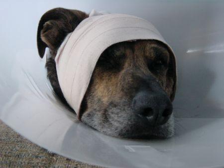 Bandages1.jpg