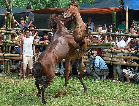 Horse Fighting 4