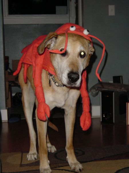 Lobster Dog 1.jpg