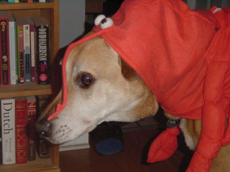 Lobster Dog 2.jpg